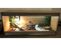Bearded Dragon - complete setup with automated thermostat.