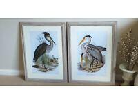 Brand new. Pair of Heron prints Framed. 60x80cm each.