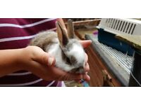 Babby rabbit looking for loving homes.