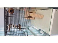 Large Gerbel/Hamster cage