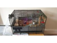 Entire hamster setup (Syrian or smaller)