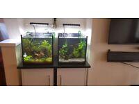 Aquarium cube, shrimp tank, thick glass.