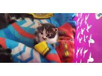 5 beatiful kittens for sale