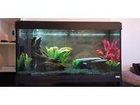 Fluval roma 200 LED aquarium