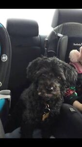 OVLPN - Lost dog in Greely