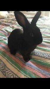 Rabbit- Free to the right home!