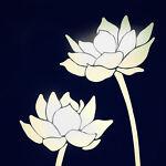 White Lotus Collection