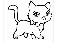 5 month black and white kitten