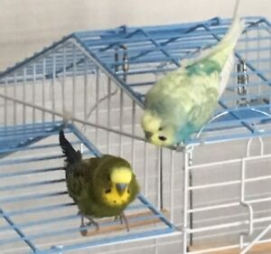 Do you need to rehome your Bird or birds ?