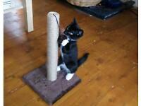12 week old kitten for sale.