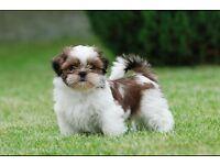 Dog Walker/sitter (Gateshead)