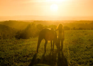 LF: A farm where I can provide equine-assisted therapy