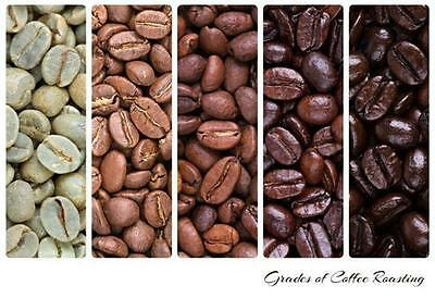 Mexican Altura Fresh Roasted Coffee Beans American Origin