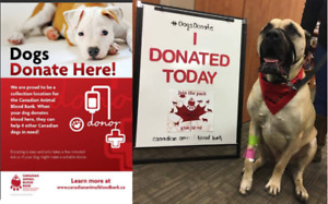 Canine Blood Drive so other lives can be saved