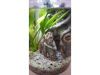 HAGEN MARINA 360 AQUARIUM KIT FISH TANK 2.65 GALLONS 10 LITRES + LED LIGHTING + HEATER
