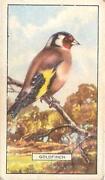 Gallaher British Birds
