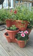 Strawberry Plant Pot