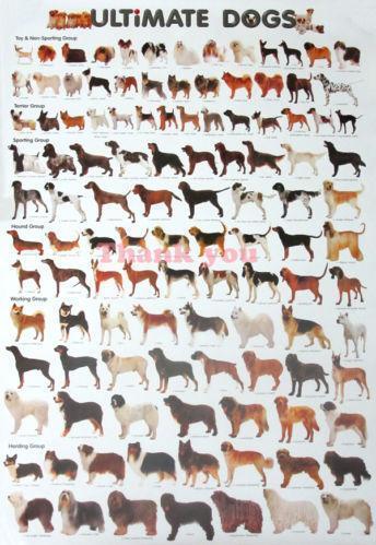 Dog Breeding Sign