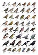 Cross Stitch Charts Birds