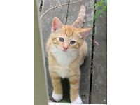 beautifull 11 month kitten
