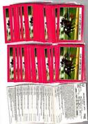 Kentucky Derby Cards