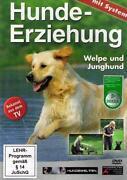 Hundeerziehung DVD