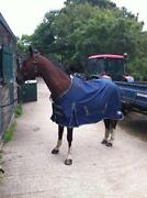 Lightweight Horse Rug