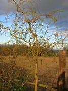 Tree Pots