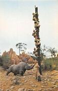 Walt Disney World Postcard