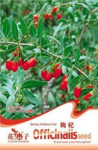 purchase goji berry plants