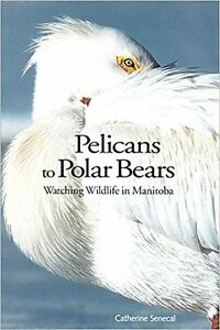 PELICANS TO POLAR BEARS  IN MANITOBA