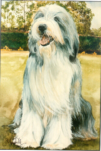 Bearded Collie Signed Art Print by UK Artist CAH Marshall LAST ONE!*