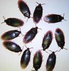 Fake Bugs