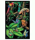 Rainforest Poster