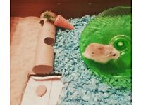 Hamster has to go ASAP