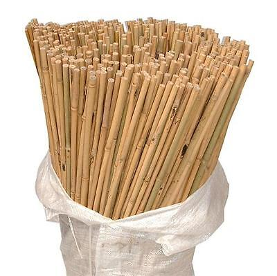 150 x 6ft Heavy Duty Bamboo Garden Canes Strong Thick Quality Plant Support