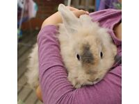 Fluffy young boy rabbit