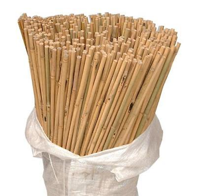 50 x 8ft Heavy Duty Bamboo Garden Canes Strong Thick Quality Plant Support