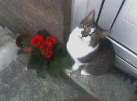 MISSING CAT REWARD.