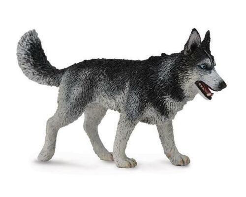 CollectA NEW * Siberian Husky * 88707 Dog Breyer Figure Toy Replica