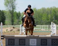 Riding Lessons Adult Groups Saturday Horse Club For Kids