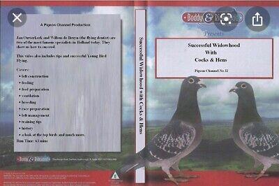 Racing Pigeon Dvd Successful Widowhood With Cocks & Hens Dvd