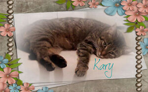 My name is Kary, I wish so much for a forever home.Carma Moncton