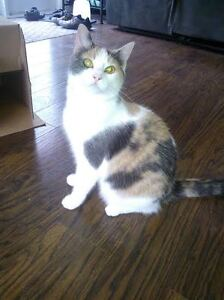 JUST UNDER 1 YR OLD KITTEN LOOKING FOR NEW OWNERS
