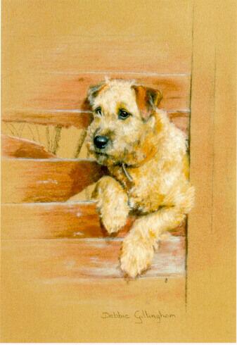 Irish Terrier Limited Edition Art Print Border Fence by Debbie Gillingham #86