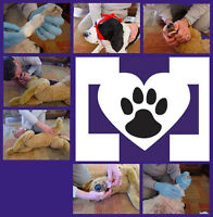 April is Pet First Aid Awareness Month!