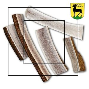 #1 Grade Antler dog chews Kitchener / Waterloo Kitchener Area image 5