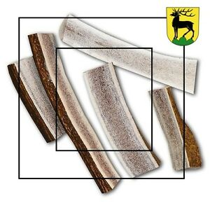 Antler Dog Chews (Best Price & Best Quality)