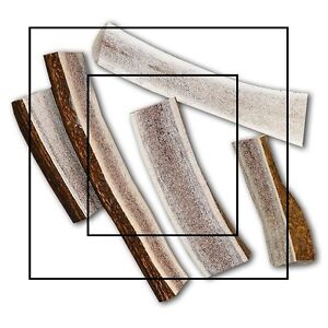 Fresh antler dog chews (Best price, best quality) Kitchener / Waterloo Kitchener Area image 6
