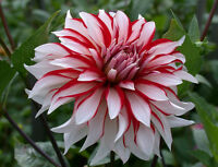 Bulbs/Perennials:  Pre-Order and Save 20%